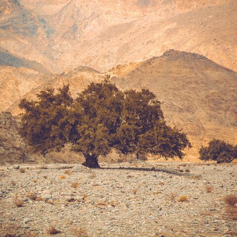 Baum in einer Steinwüste - fotokunst von Franz Sussbauer