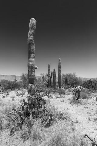SAGUARO NATIONAL PARK Wüstenimpression - fotokunst von Melanie Viola