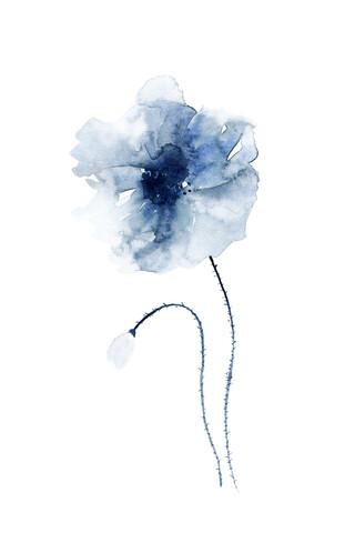 Blue Poppies No. 1 - fotokunst von Cristina Chivu