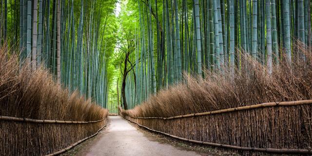 Bambuswald in Arashiyama - fotokunst von Jan Becke