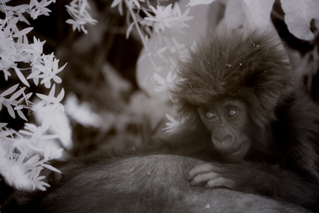 Titus baby - fotokunst von Nicole Cambré