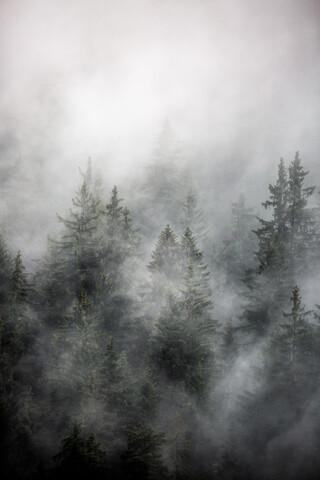 Foggy Morning 1 - fotokunst von Mareike Böhmer