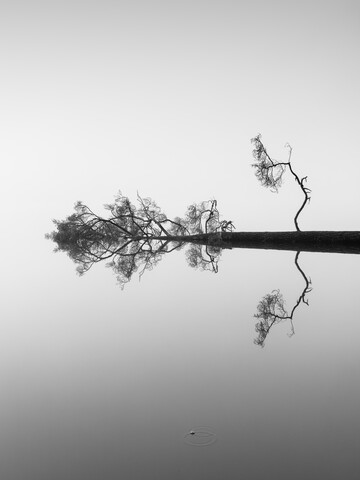 Reflections on Water - fotokunst von Holger Nimtz