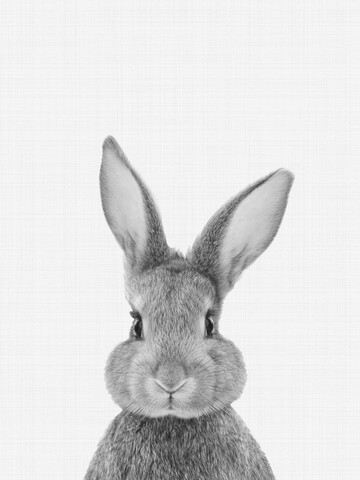 Rabbit (Black and White) - fotokunst von Vivid Atelier