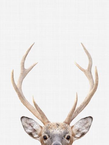 Deer - fotokunst von Vivid Atelier