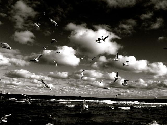 black birds - fotokunst von Linda Steinhoff