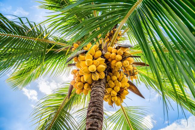 Kokospalme am Strand - fotokunst von Jan Becke