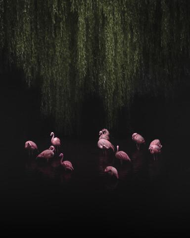 The dance - fotokunst von Ashley Groom