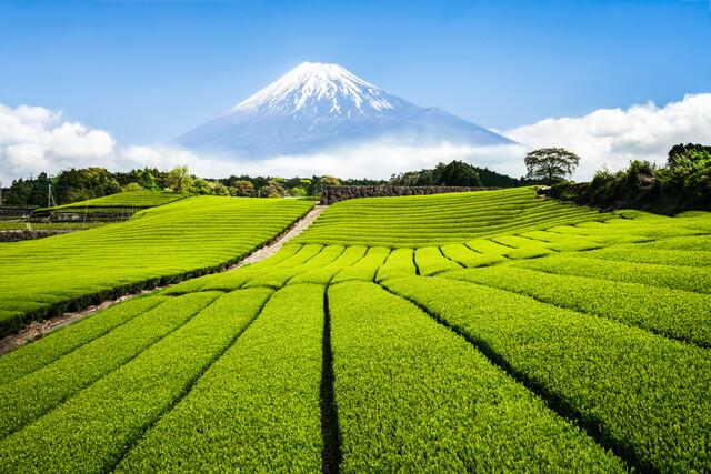 Teeplantagen am Fuße des Berg Fuji - fotokunst von Jan Becke