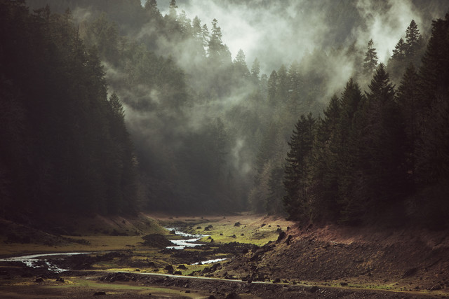 Foggy Forest Creek - fotokunst von Kevin Russ