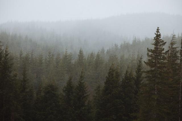 Snowy Forks Forest - fotokunst von Kevin Russ