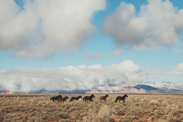 Navajo Horses - fotokunst von Kevin Russ
