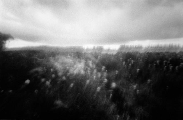Blumenwiese - fotokunst von Sabine Alex