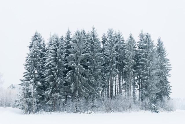 A small Snowy Forest - fotokunst von Pekka Liukkonen