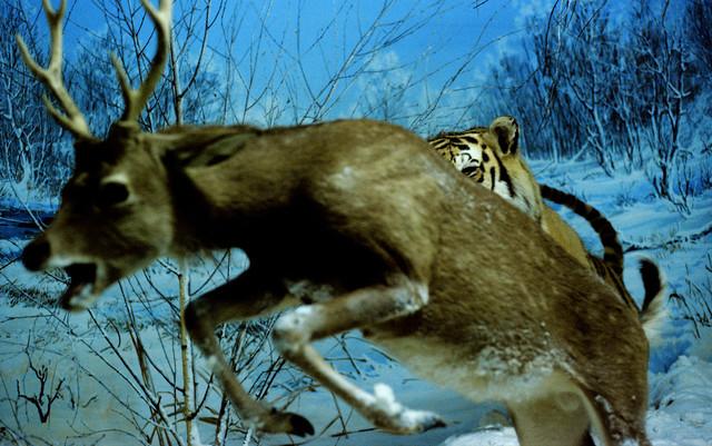 Jagd - fotokunst von Wolfgang Filser