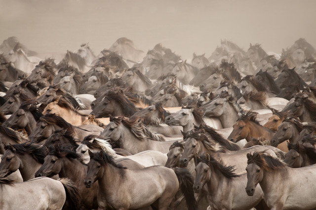 Wild Horses - fotokunst von Stefanie Lategahn