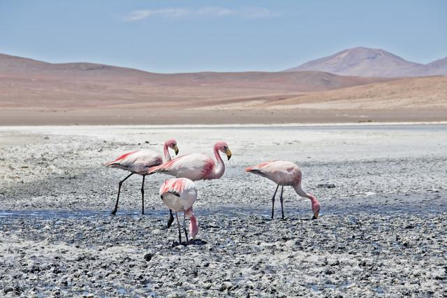 Lagoon Flamingos - fotokunst von Kay Wiegand