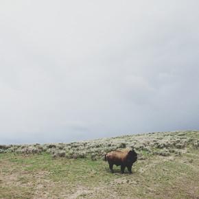 Kevin Russ, Solo Bison (Vereinigte Staaten, Nordamerika)