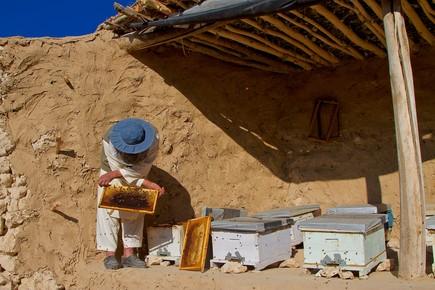 Rada Akbar, Honey making (Afghanistan, Asien)