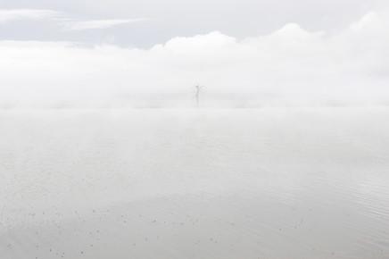 Schoo Flemming, Tree in Fog (Mongolei, Asien)
