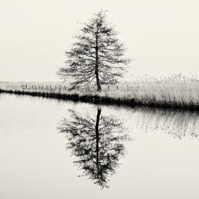 J. Daniel Hunger, Baum #9 (Deutschland, Europa)