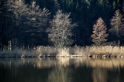 Ernst Pini, Waldsee2 (Deutschland, Europa)