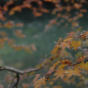 Regis Boileau, Coral lips on jade canopy (Japan, Asien)