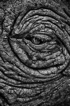 Nicole Cambré, Eye contact (Sambia, Afrika)