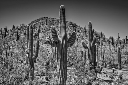 Melanie Viola, Landschaft in Arizona schwarz-weiß (Vereinigte Staaten, Nordamerika)