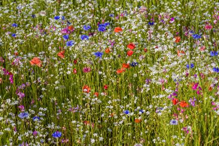 Ralf Germer, Blütenzauber (Deutschland, Europa)