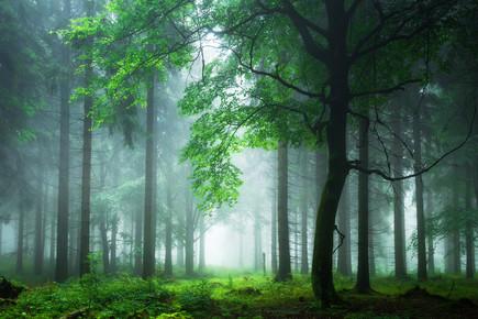 Heiko Gerlicher, Sommernebel im Thüringer Wald (Deutschland, Europa)