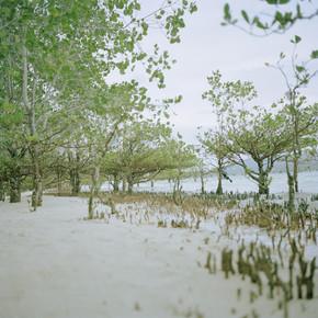 Lilli Breininger, Junge Mangrooven (Phillipinen, Asien)