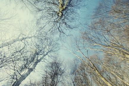 Nadja Jacke, Winterlicher blauer Himmel im Teutoburger Wald (Deutschland, Europa)