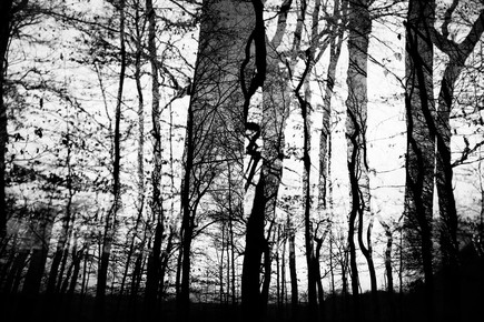 Rolf Bökemeier, mystischer Wald (Deutschland, Europa)
