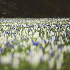 Nadja Jacke, Frühlingswiese in blau-weiß-grün (Deutschland, Europa)