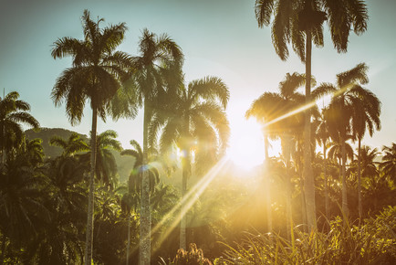 Saskia Gaulke, Sunshine (Kuba, Lateinamerika und die Karibik)