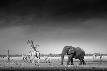 Tillmann Konrad, Waterhole (Namibia, Afrika)