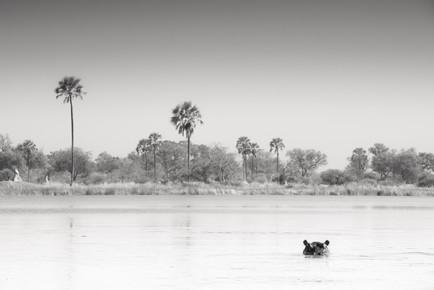 Tillmann Konrad, Watching you! (Botswana, Afrika)