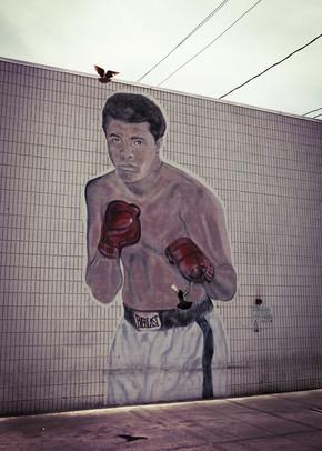 Florian Büttner, Ali vs pigeon (Vereinigte Staaten, Nordamerika)