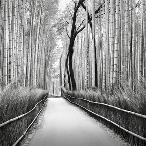 Ronny Behnert, Arashiyama Bambuswald Kyoto (Japan, Asien)