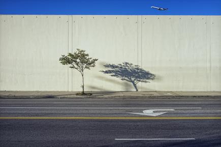 Jeff Seltzer, Tree, Shadow, and Plane (Vereinigte Staaten, Nordamerika)