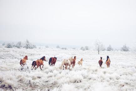 Kevin Russ, Winter Horseland (Vereinigte Staaten, Nordamerika)