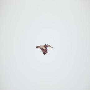 Kevin Russ, Solo Flight (Vereinigte Staaten, Nordamerika)