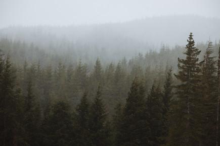 Kevin Russ, Snowy Forks Forest (Vereinigte Staaten, Nordamerika)