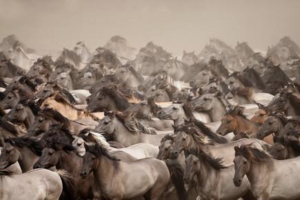 Stefanie Lategahn, Wild Horses (Deutschland, Europa)