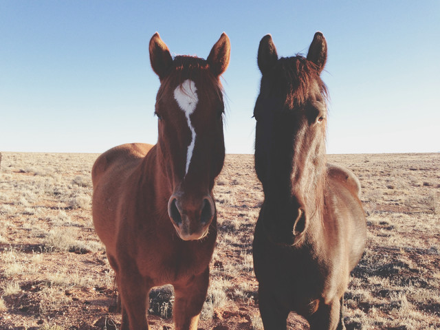 Horse Friends - Fineart photography by Kevin Russ