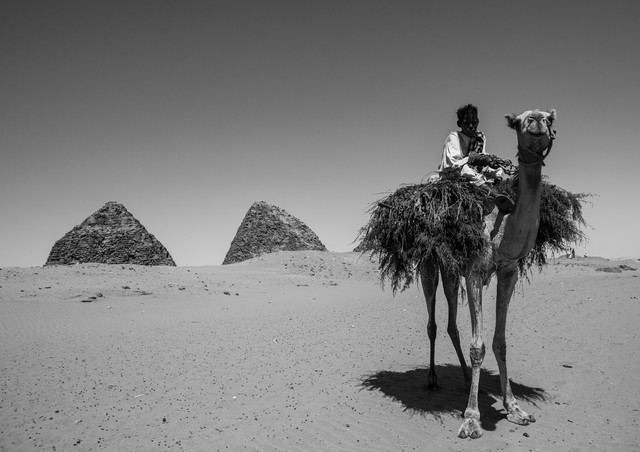 Kid On A Camel In Front Of The Royal Pyramids Of Napata, Nuri, S - Fineart photography by Eric Lafforgue