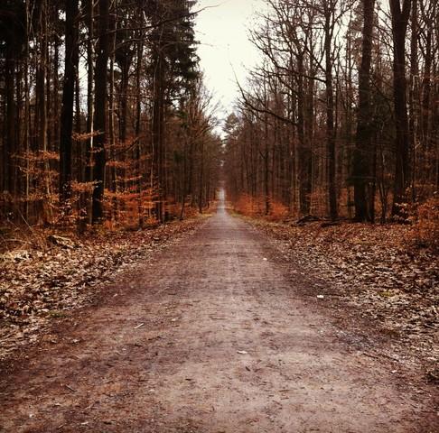 Weg in den Wald - Fineart photography by Michael Brandone