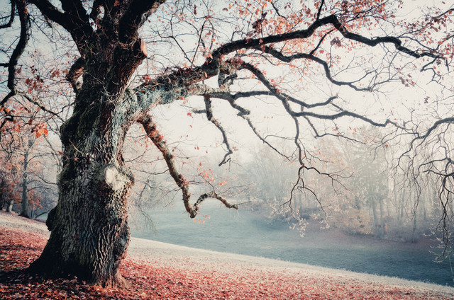 Herbstgeschichten - Fineart photography by Heiko Gerlicher