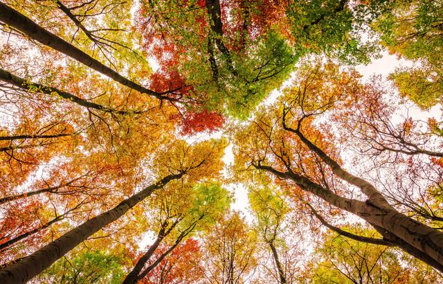 Die Farben des Herbstes - Fineart photography by Heiko Gerlicher